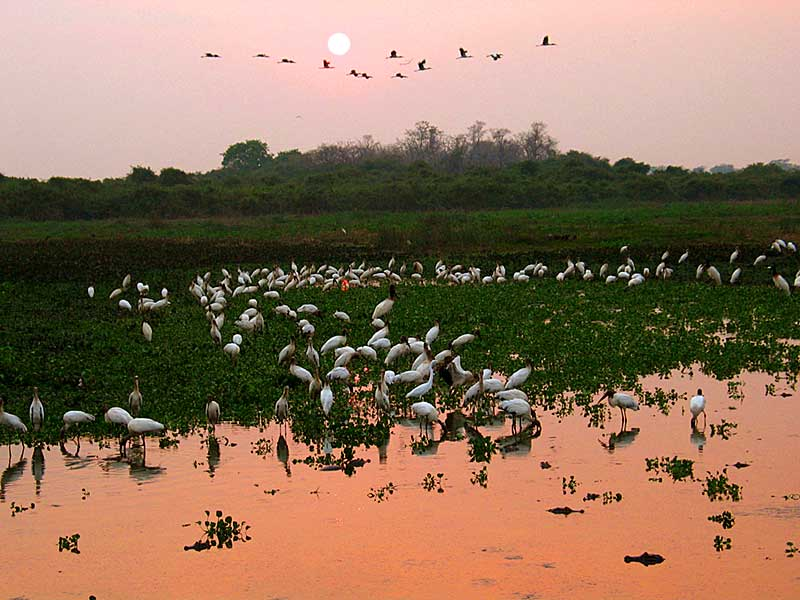 Turismo no Pantanal