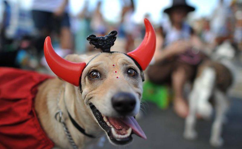 4c2a2e90075f4 Bloco CarnaPet promete reunir cães e donos na folia. Evento irá reunir  doações para cães abandonados.